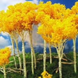 2 XL ASST. Color Decidious Trees